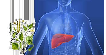 apparato fegato urinario